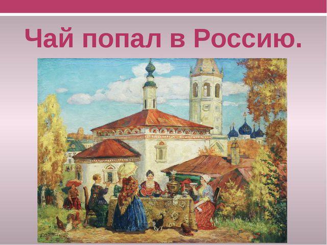 Чай попал в Россию.