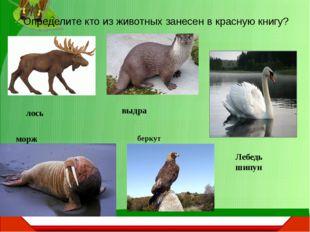 Определите кто из животных занесен в красную книгу? лось морж беркут выдра Ле