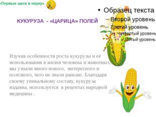 Изучив особенности роста кукурузы и её использования в жизни человека и живо