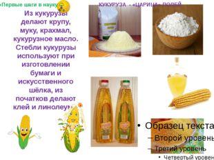 Из кукурузы делают крупу, муку, крахмал, кукурузное масло. Стебли кукурузы и