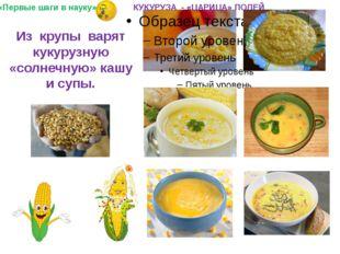 Из крупы варят кукурузную «солнечную» кашу и супы. «Первые шаги в науку» КУКУ
