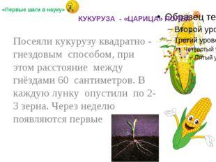Посеяли кукурузу квадратно - гнездовым способом, при этом расстояние между г