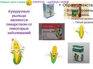 Кукурузные рыльца являются лекарством от некоторых заболеваний «Первые шаги