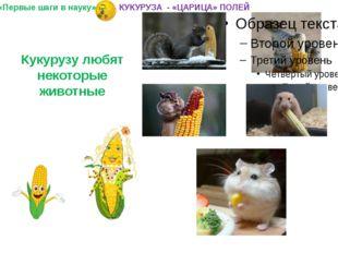Кукурузу любят некоторые животные «Первые шаги в науку» КУКУРУЗА - «ЦАРИЦА» П