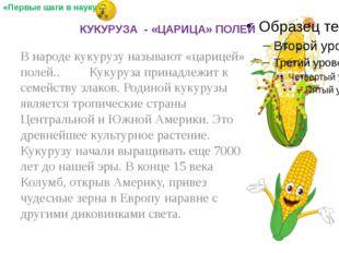В народе кукурузу называют «царицей» полей.. Кукуруза принадлежит к семейств