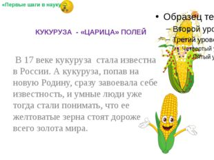 В 17 веке кукуруза стала известна в России. А кукуруза, попав на новую Родин
