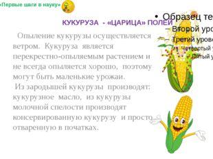 Опыление кукурузы осуществляется ветром. Кукуруза является перекрестно-опыля