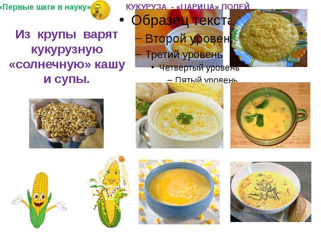 Из крупы варят кукурузную «солнечную» кашу и супы. «Первые шаги в науку» КУКУ...