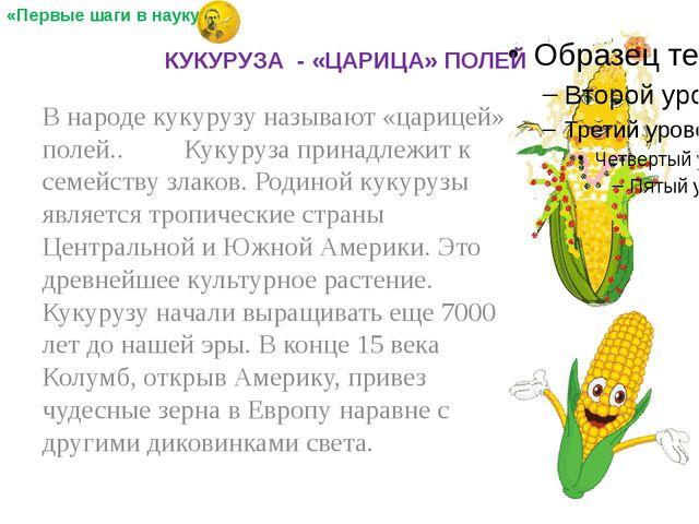 В народе кукурузу называют «царицей» полей.. Кукуруза принадлежит к семейств...