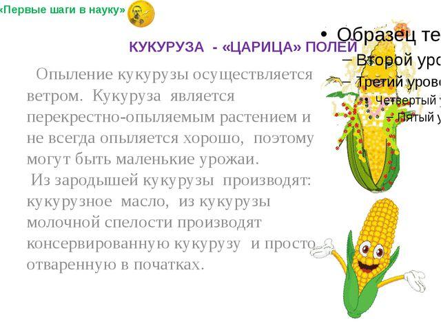 Опыление кукурузы осуществляется ветром. Кукуруза является перекрестно-опыля...