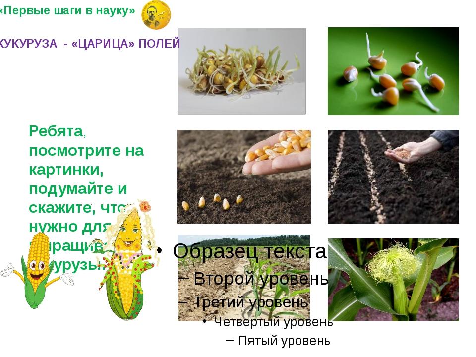 Ребята, посмотрите на картинки, подумайте и скажите, что нужно для выращиван...