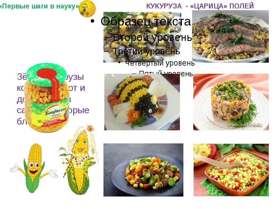 Зёрна кукурузы консервируют и добавляют в салаты и вторые блюда. «Первые шаг...