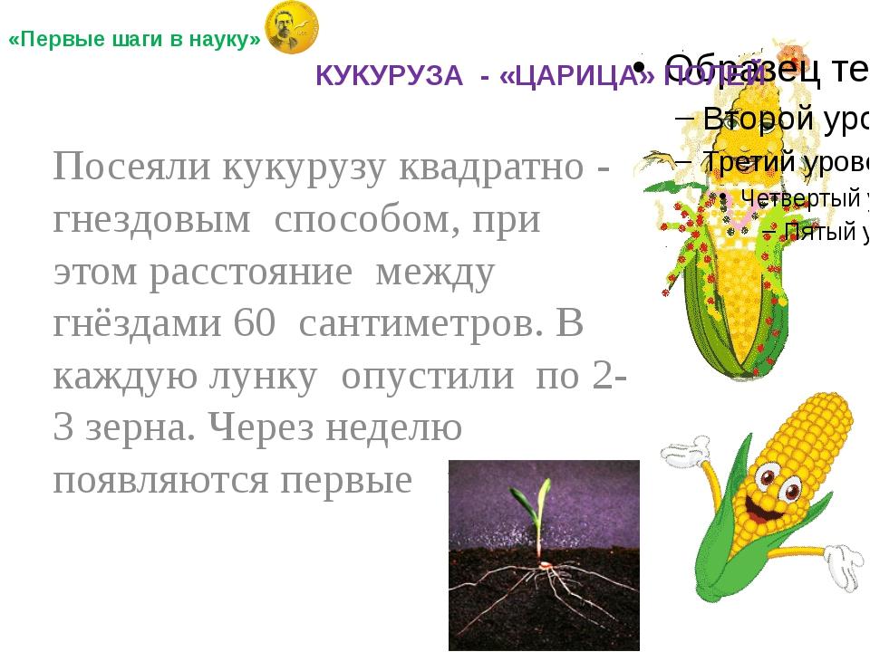Посеяли кукурузу квадратно - гнездовым способом, при этом расстояние между г...