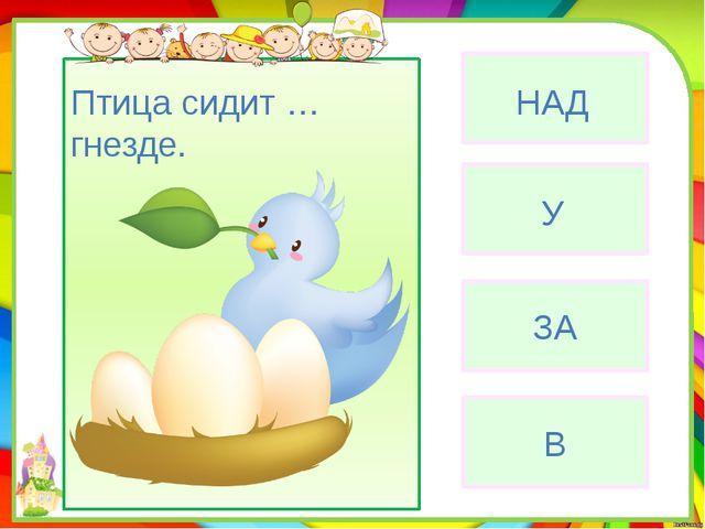 ЗА В Птица сидит … гнезде. У НАД