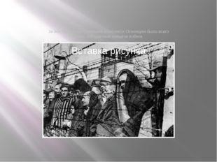 За все годы существования комплекса Освенцим было всего лишь 300 удачных попы