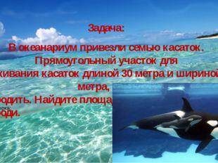 Задача: В океанариум привезли семью касаток. Прямоугольный участок для прожив