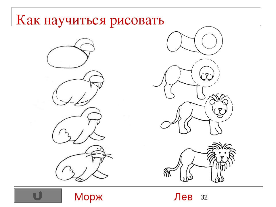 Как научиться рисовать Морж Лев