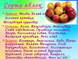 Сорта яблок Летние: Мелба, Белый налив, Золотая китайка, Московская грушовка