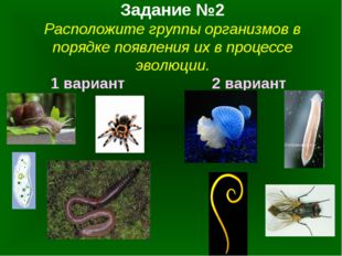 Задание №2 Расположите группы организмов в порядке появления их в процессе эв