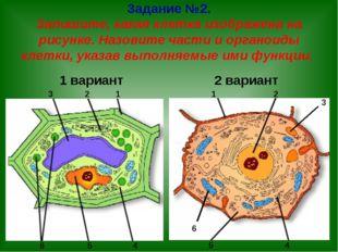 Задание №2. Запишите, какая клетка изображена на рисунке. Назовите части и ор