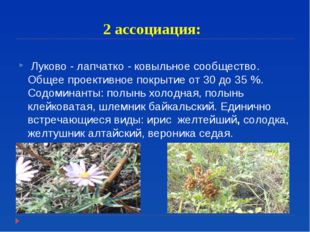 2 ассоциация: Луково - лапчатко - ковыльное сообщество. Общее проективное пок