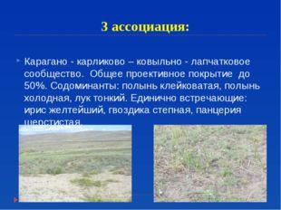 3 ассоциация: Карагано - карликово – ковыльно - лапчатковое сообщество. Общее