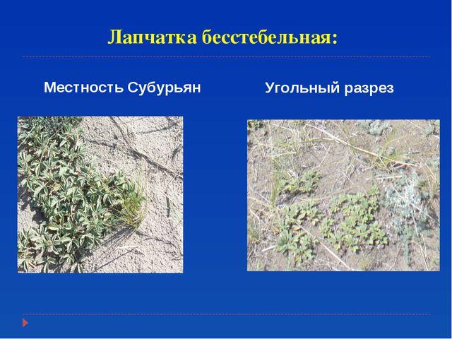 Лапчатка бесстебельная: Местность Субурьян Угольный разрез