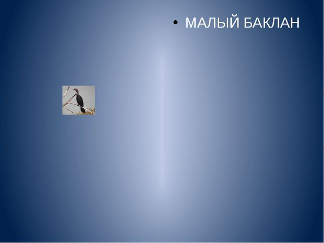 МАЛЫЙ БАКЛАН