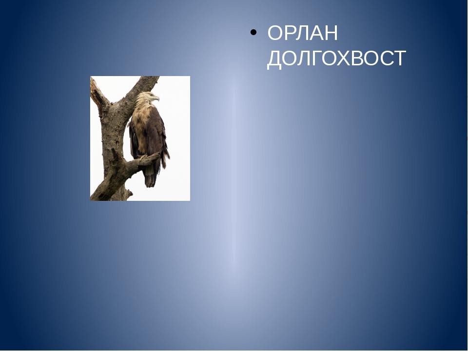 ОРЛАН ДОЛГОХВОСТ