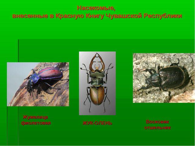 вашем насекомые урала описание с картинками страна