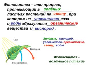 Фотосинтез – это процесс, протекающий в ______________ листьях растений на___