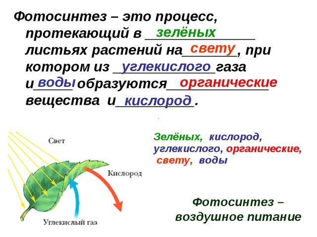 Фотосинтез – это процесс, протекающий в ______________ листьях растений на___...