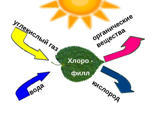 кислород органические вещества вода углекислый газ