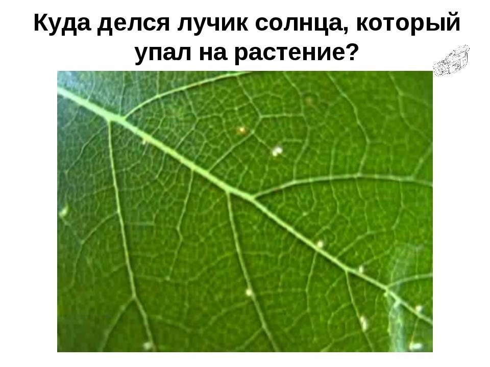 Куда делся лучик солнца, который упал на растение?