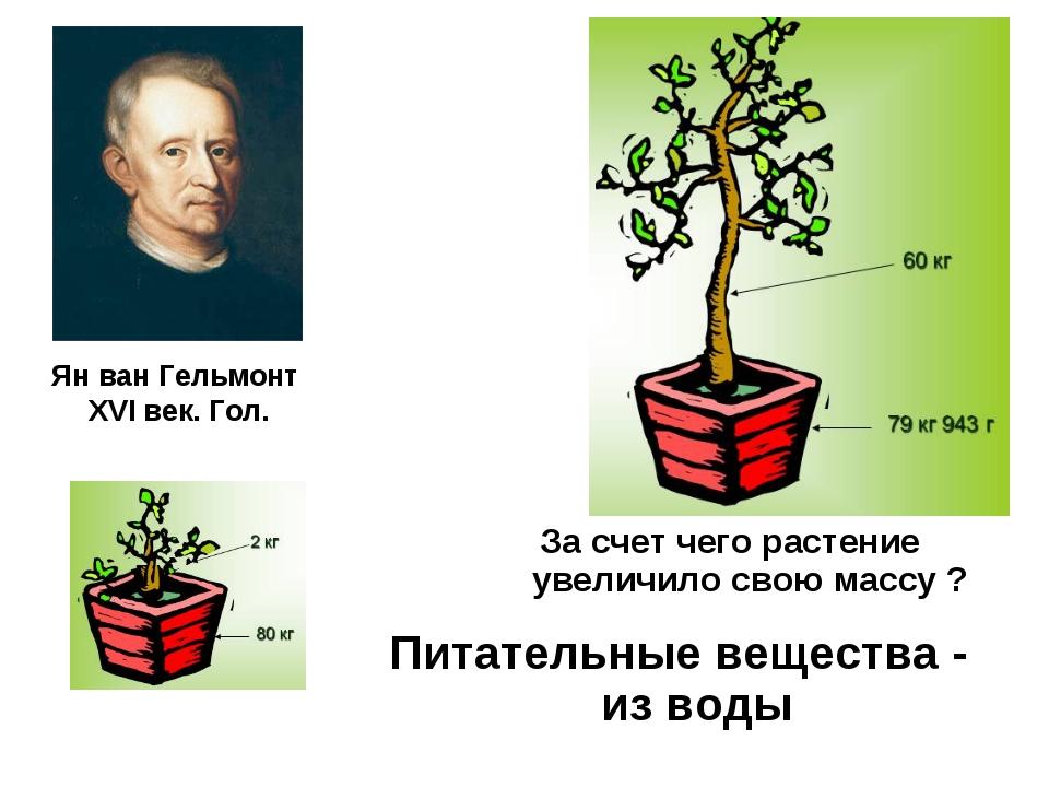 Ян ван Гельмонт XVI век. Гол. За счет чего растение увеличило свою массу ? Пи...