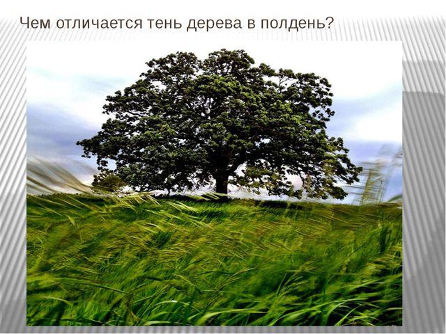 Чем отличается тень дерева в полдень?