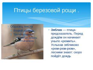 Птицы березовой рощи . Зяблик — птица-предсказатель. Перед дождём он начинает