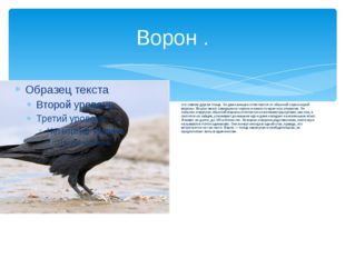 Ворон . это совсем другая птица. Он даже внешне отличается от обычной черно-