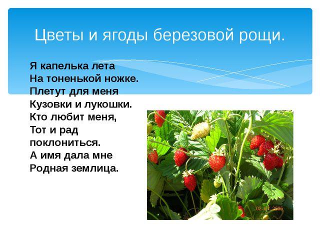Цветы и ягоды березовой рощи. Я капелька лета На тоненькой ножке. Плетут для...
