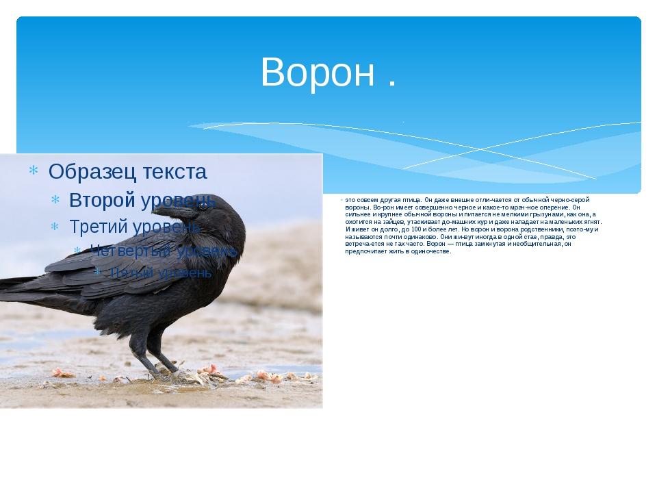 Ворон . это совсем другая птица. Он даже внешне отличается от обычной черно-...