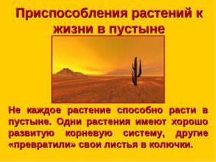 Приспособления растений к жизни в пустыне Не каждое растение способно расти в
