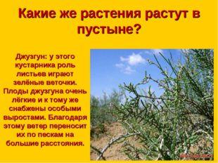 Какие же растения растут в пустыне? Джузгун: у этого кустарника роль листьев