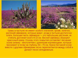 Травы в пустыне не имеют особого значения, кроме, конечно, растений-эфемеров,