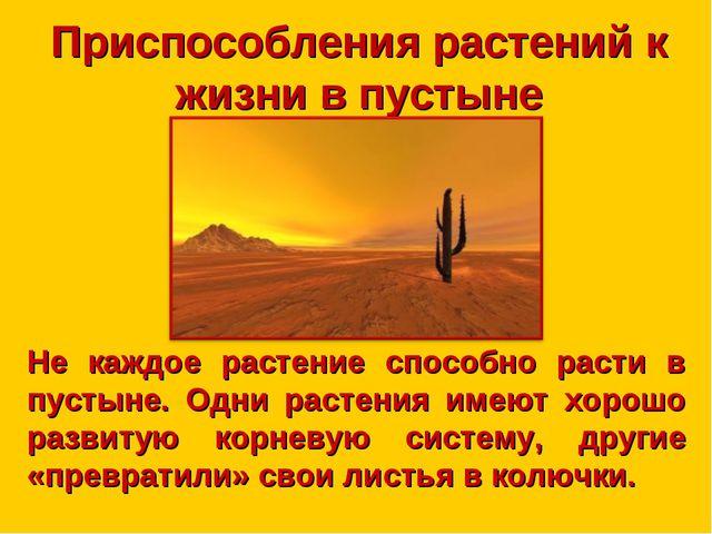 Приспособления растений к жизни в пустыне Не каждое растение способно расти в...