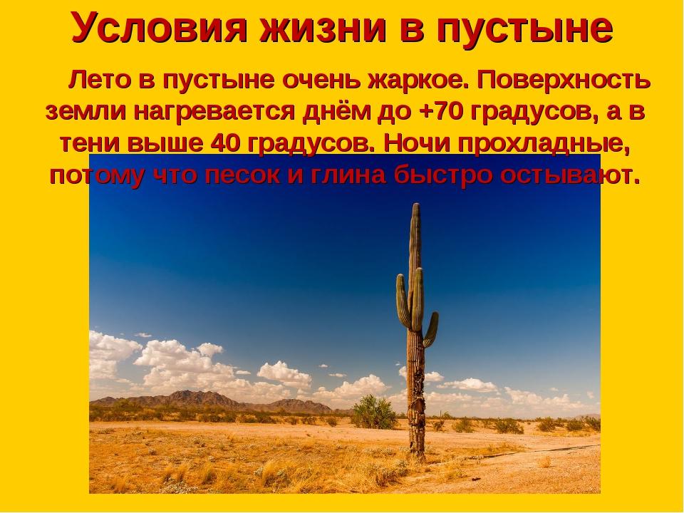 Условия жизни в пустыне Лето в пустыне очень жаркое. Поверхность земли нагрев...