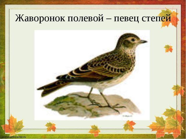 Жаворонок полевой – певец степей