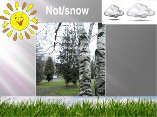 Not/snow
