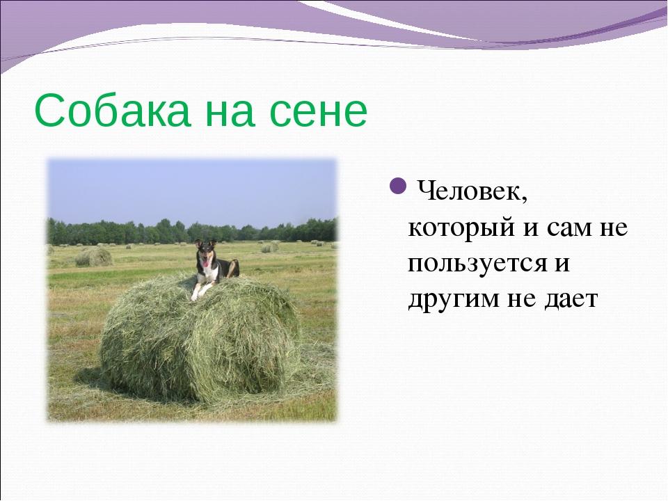 Собака на сене Человек, который и сам не пользуется и другим не дает
