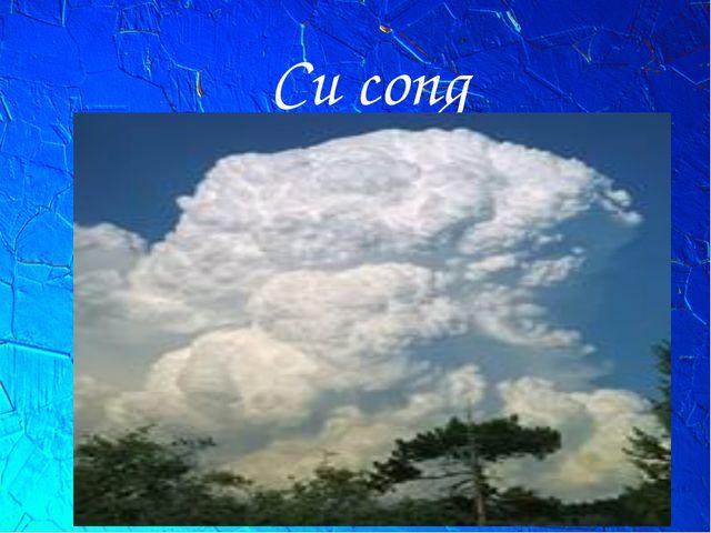 Cu cong