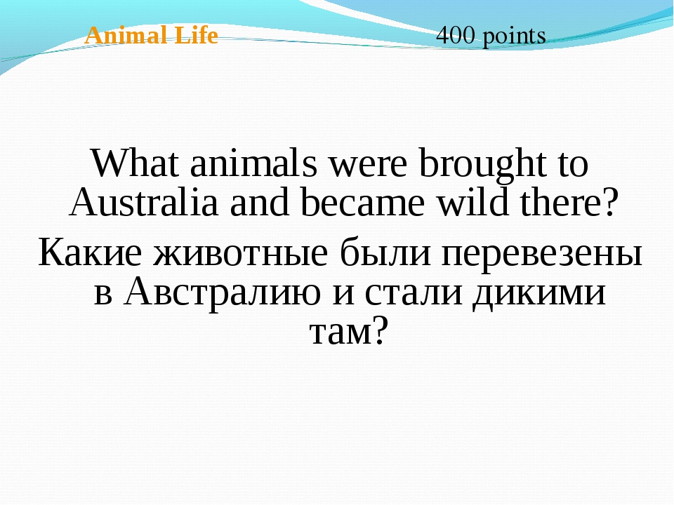 Animal Life 400 points What animals were brought to Australia and became wil...